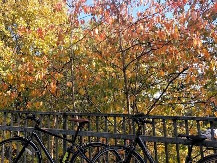 Belles on Bikes GCU November Rides